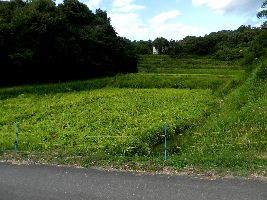2017-09・18 里山の稲田は台風で・・・ (1).JPG
